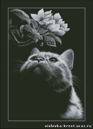 Кот с магнолией